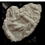 Trace fossils (Ichnofossils)