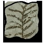 Plants (Plantae)