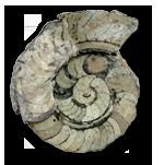 Cephalopods (Cephalopoda)