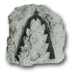 Graptolites (Graptolithina)