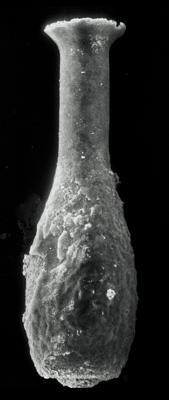 <i><i>Lagenochitina esthonica</i></i><br />Rapla borehole, 185.50 m, Kunda Stage ( 190-30)