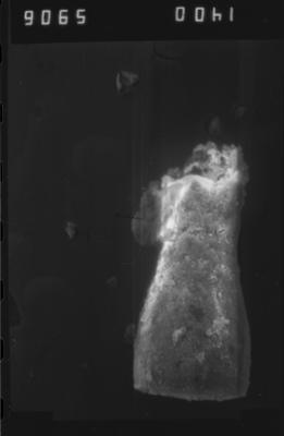 <i><i>Eisenackitina</i>   Eisenackitina sp.</i><br />Dubovskoye borehole, 1299.00 m, Paadla Stage ( 754-1129)