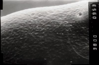 <i><i>Conochitina</i> | Conochitina cf. emmastensis</i><br />Varbla 502 borehole, 155.00 m, Adavere Stage ( 754-1032)