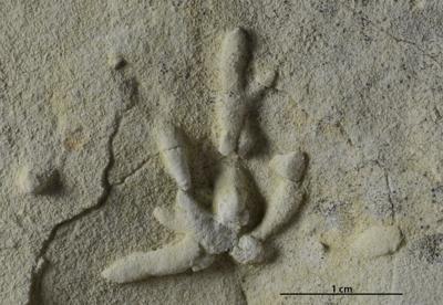Chondrites isp., GIT 362-254