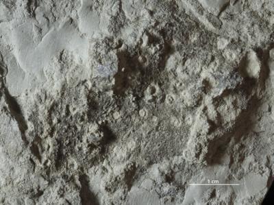 Skolithos isp., GIT 362-81
