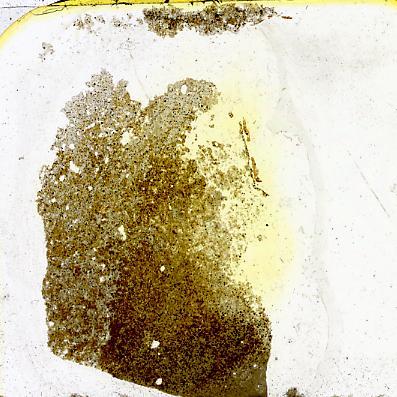Dartmuthia gemmifera Patten, 1931, TUG 267-60