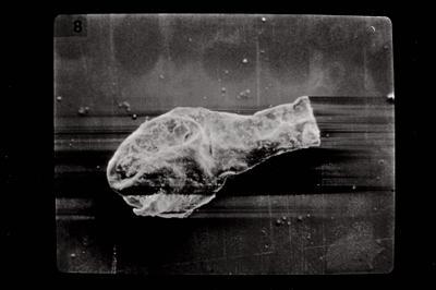 <i><i>Angochitina ceratophora</i> | Angochitina cf. ceratophora</i><br />Ohesaare borehole, 84.14 m, Kuressaare Stage ( 754-586)