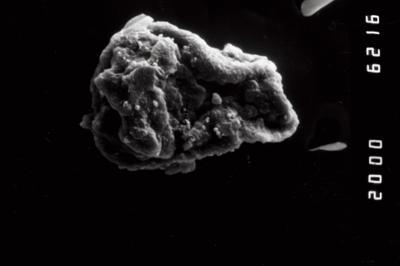 <i><i>Sphaerochitina</i> | Sphaerochitina? sp.</i><br />Ohesaare borehole, 13.95 m, Kaugatuma Stage ( 754-984)