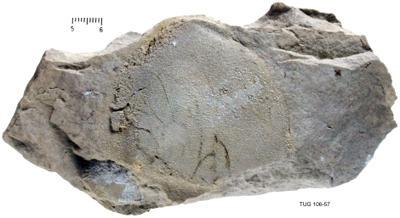 Illaenus roemeri Volborth, 1864, TUG 106-57