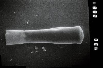 <i><i>Conochitina</i> | Conochitina cf. pachycephala</i><br />Ruhnu 500 borehole, 392.80 m, Jaagarahu Stage ( 754-1053)