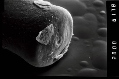 <i><i>Conochitina claviformis</i></i><br />Ohesaare borehole, 68.30 m, Kuressaare Stage ( 754-969)