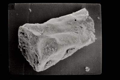 <i><i>Linochitina</i> | Linochitina sp.</i><br />Ohesaare borehole, 89.30 m, Paadla Stage ( 754-604)