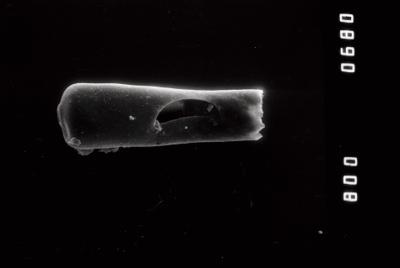 <i><i>Conochitina tuba</i></i><br />Riksu 803 borehole, 89.25 m, Jaagarahu Stage ( 754-1328)