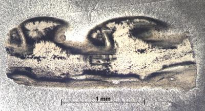 Cephalaspidomorphi
