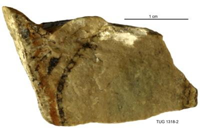 Cyclocrinites roemeri Stolley, TUG 1318-2