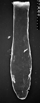 <i><i>Chitinozoa</i></i><br />,  m,  ( 1532-94)