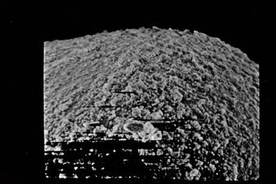 <i><i>Eisenackitina oviformis</i> | Eisenackitina cf. oviformis</i><br />Ohesaare borehole, 60.65 m, Kaugatuma Stage ( 754-722)
