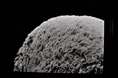 <i><i>Salopochitina filifera</i></i><br />Ohesaare borehole, 19.60 m, Kaugatuma Stage ( 754-711)