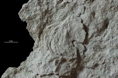 Rhizocorallium isp., GIT 720-794