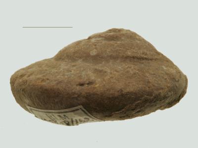 Eotomaria cf. notabilis (Eichwald), ELM G8:162