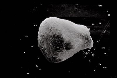 <i><i>Eisenackitina</i> | Eisenackitina sp. sp.</i><br />Kolka 54 borehole, 202.00 m, Kaugatuma Stage ( 754-592)