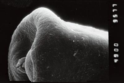 <i><i>Eisenackitina</i>   Eisenackitina sp. 1</i><br />Jaagarahu borehole, 43.60 m, Jaani Stage ( 754-205)
