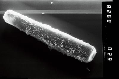 <i><i>Conochitina</i> | Conochitina cf. iklaensis</i><br />Ruhnu 500 borehole, 493.15 m, Raikküla Stage ( 754-1021)