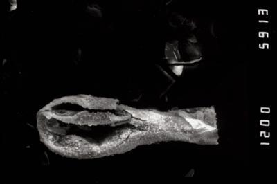 <i><i>Sphaerochitina</i> | Sphaerochitina sp.</i><br />Dubovskoye borehole, 1284.00 m, Paadla Stage ( 754-1135)