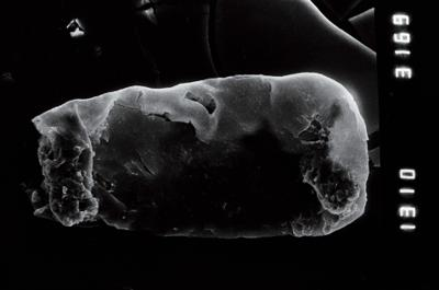 <i><i>Linochitina</i>   Linochitina sp.1</i><br />Nagli 106 borehole, 645.40 m, Adavere Stage ( 754-949)