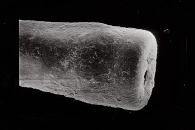 <i><i>Conochitina linearistriata</i> | Conochitina cf. linearistriata</i><br />Ruhnu 500 borehole, 333.00 m, Jaagarahu Stage ( 754-773)