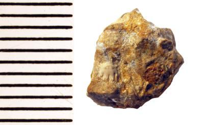 Remopleurides nanus elongatus Fr. Schmidt, 1894, TUG 1085-15