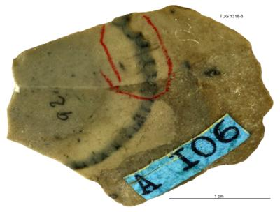 Cyclocrinites mickwitzi Stolley, TUG 1318-6