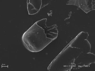 <i><i>Rhabdochitina</i> | Rhabdochitina sp. 1</i><br />Ventspils D-3 borehole, 404.00 m, Kaugatuma Stage ( 754-1804)