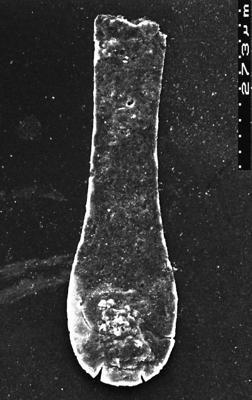 <i><i>Chitinozoa</i></i><br />Akmene 71 borehole,  m,  ( 1526-41)