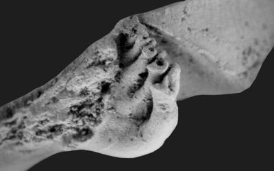 Cyrtonotella kuckersiana (Wysogorski, 1900), GIT 400-3