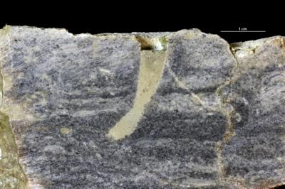 Arenicolites isp., GIT 362-558