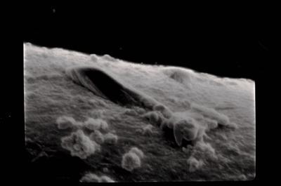 <i><i>Conochitina proboscifera</i> | Conochitina aff. proboscifera</i><br />Häädemeeste 172 borehole, 232.40 m, Raikküla Stage ( 754-626)