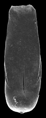<i><i>Conochitina praeproboscifera</i></i><br />Kolka 54 borehole, 601.00 m, Adavere Stage ( 546-23)