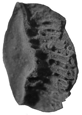 Acanthodii