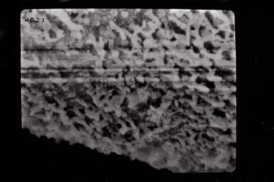 <i><i>Conochitina cribrosa</i></i><br />Ruhnu 500 borehole, 288.15 m, Jaagarahu Stage ( 754-784)