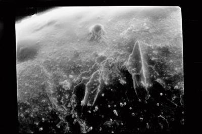 <i><i>Conochitina claviformis</i> | Conochitina aff. claviformis</i><br />Ohesaare borehole, 161.00 m, Jaagarahu Stage ( 754-214)