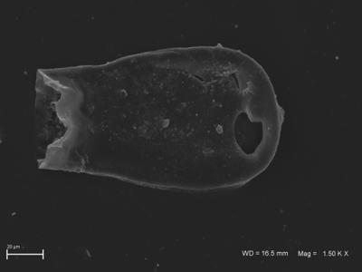 <i><i>Chitinozoa</i></i><br />,  m,  ( 754-1812)