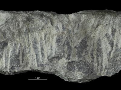 Skolithos isp., GIT 362-80