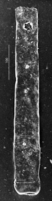 <i><i>Rhabdochitina</i> | Rhabdochitina sp.</i><br />Aispute 41 borehole, 976.45 m, Silurian ( 345-6)
