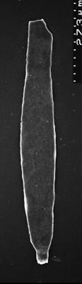<i><i>Chitinozoa</i></i><br />,  m,  ( 1532-88)