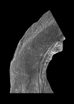 Drepanodus arcuatus Pander, 1856, GIT 594-134