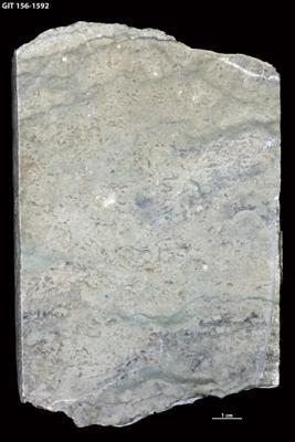 Algae (informal)