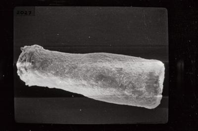 <i><i>Conochitina cribrosa</i> | Conochitina cf. cribrosa</i><br />Kolka 54 borehole, 474.60 m, Jaagarahu Stage ( 754-774)