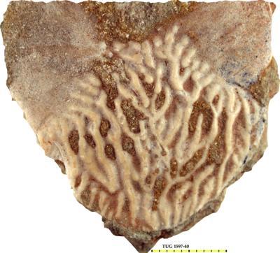 Holoptychius nobilissimus Agassiz, 1839, TUG 1597-40