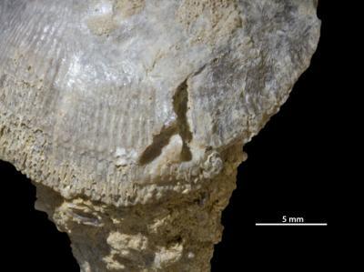 Bioerosional trace fossils